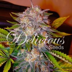 Caramelo 1.u.fem.Delicious Seeds