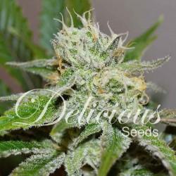 Original Juan Herrer 3.u.fem.Delicious Seeds