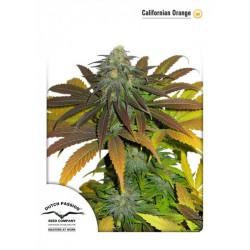 California Orange 10 u. Feminizadas