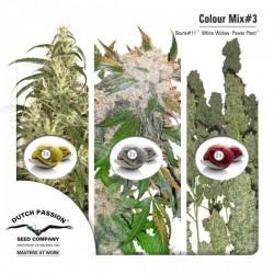 Mix Color nº 3 Dutch Passion