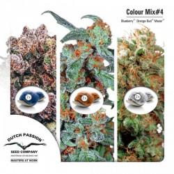 Mix Color nº 4 Dutch Passion