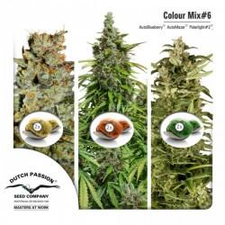 Mix Color nº 6 Dutch Passion