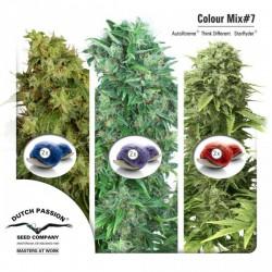 Mix Color nº 7 Dutch Passion