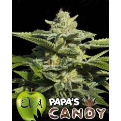 Papa's Candy 3 u. Feminizadas