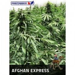 Afghan Express  1 u. Feminizadas