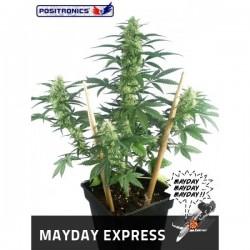 Auto Mayday Express  3 u. Feminizadas