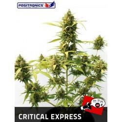Auto Critical Express  1 u. Feminizadas