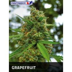 Grapefruit 5 u. Feminizadas