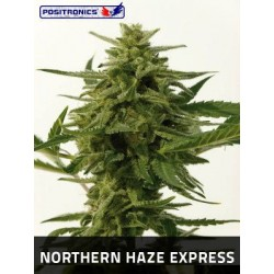 Northern Haze Express 5 u. Feminizadas