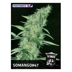 Somango  47 -  5 u. Feminizadas